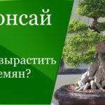 Выращивание бонсай из семян — особенности агротехники
