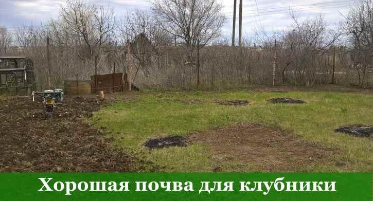 выбор почвы под садовую землянику