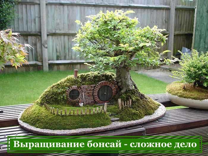 выращивание бонсай из семян дома