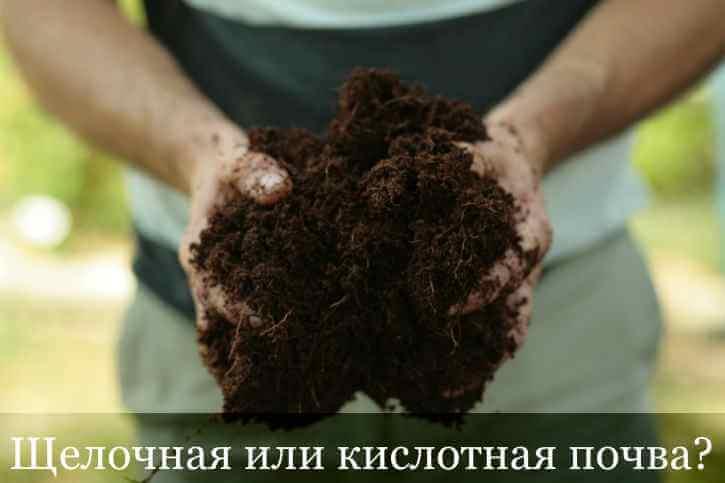 Определить, кислая почва или щелочная можно с помощью соляной кислоты