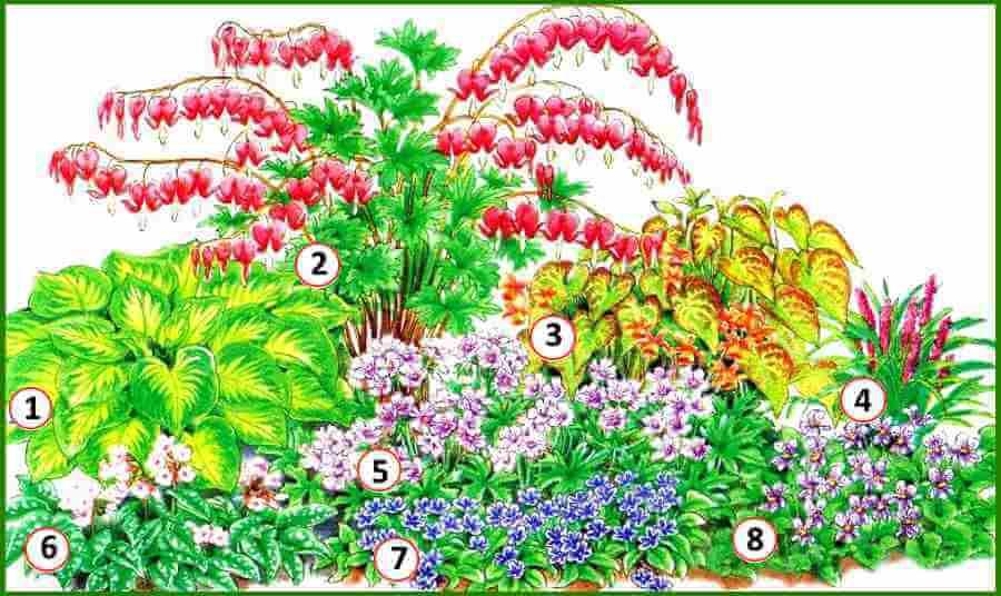 Многолетние цветы для тени