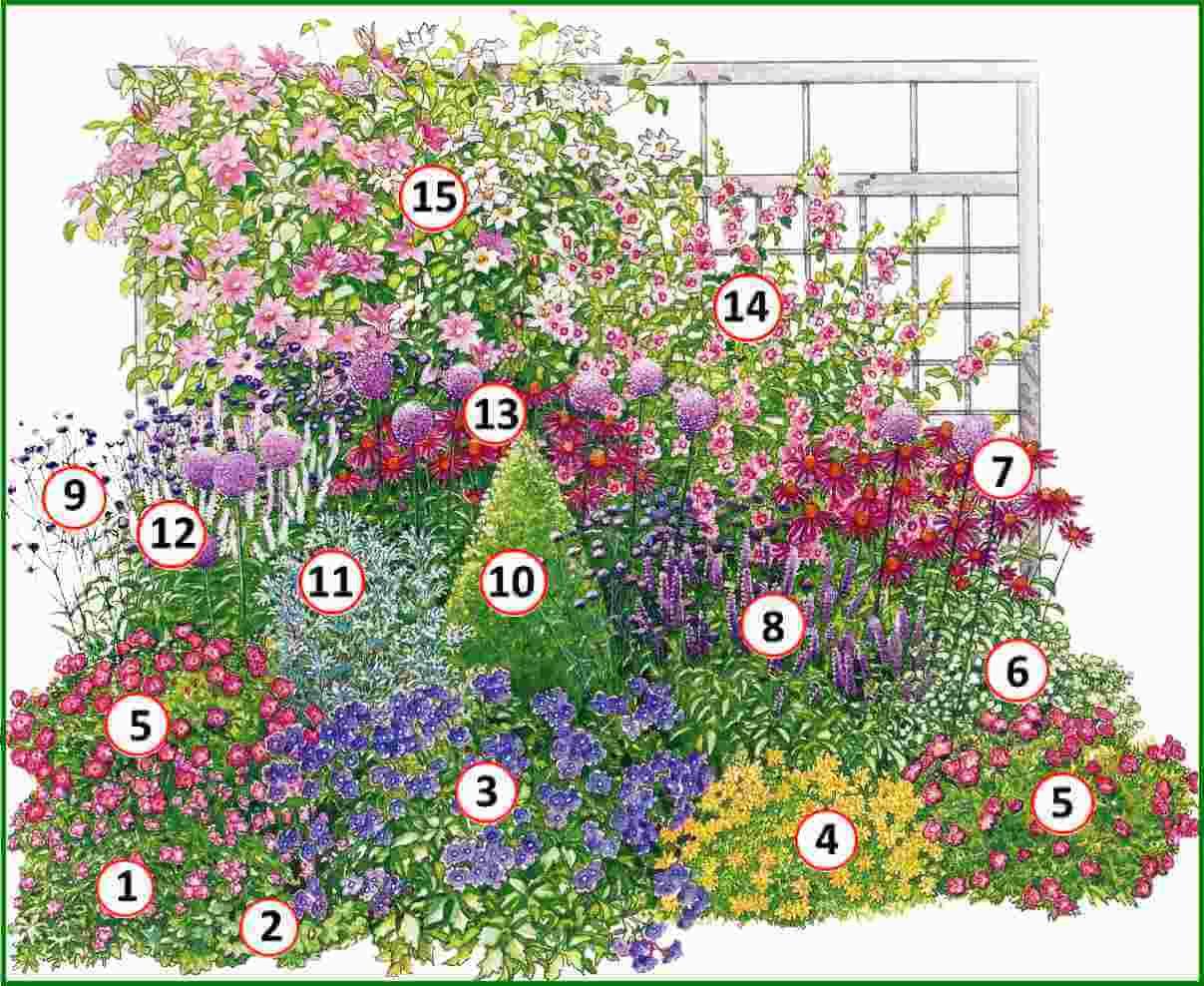 Подборка многолетних трав для цветника