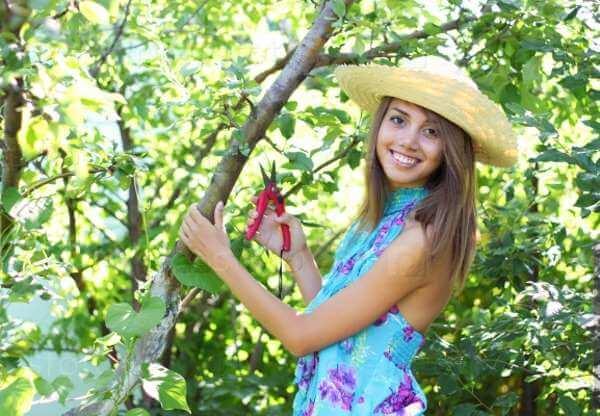 Как выбрать садовый секатор и не пожалеть о покупке?