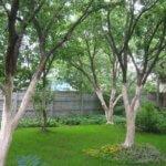 Подготавливаем дерево к побелке и правильно разводим известь