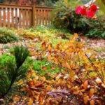 Допустима ли посадка деревьев в конце осени?
