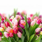 Как и когда правильно сажать луковицы тюльпанов