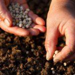 Как выбрать хорошие семена на посадку